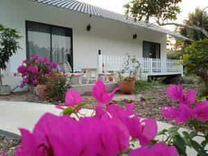 Khuôn viên đầy hoa lá tại Homestay Bến Tre Cocoland, điểm đến du lịch C2T