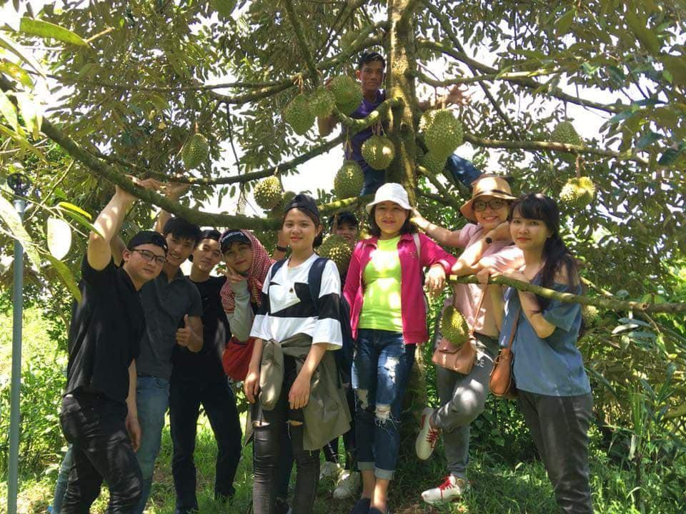 Khách thăm vườn sầu riêng Bảy Thảo - Bến Tre- du lịch C2T