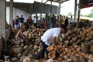Học cách tách vỏ dừa tại cơ sở SX sơ dừa