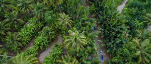 Rừng dừa nước trong thành phố Bến Tre