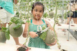 Tham quan vườn dưa lưới tại KDL Phú An Khang