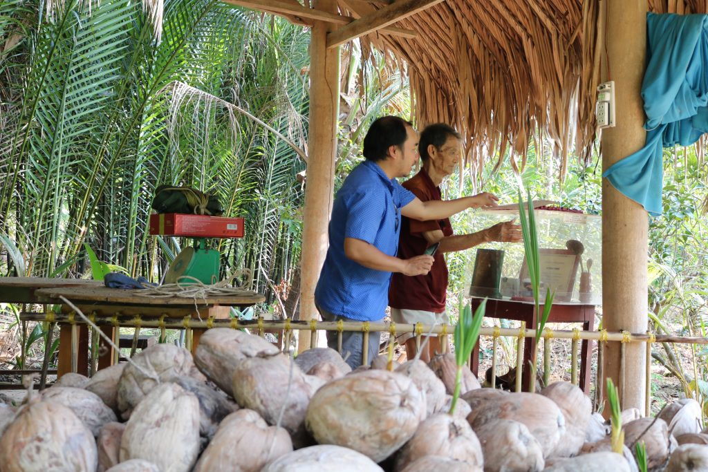 Tham quan chỗ nhân dừa giống của Vua dừa Việt Nam - bác Tám Thưởng