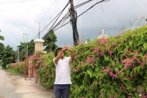 Hàng rào đầy hoa tigon mê tít mắt ở Lộc Thuận, Bình Đại - du lịch c2t