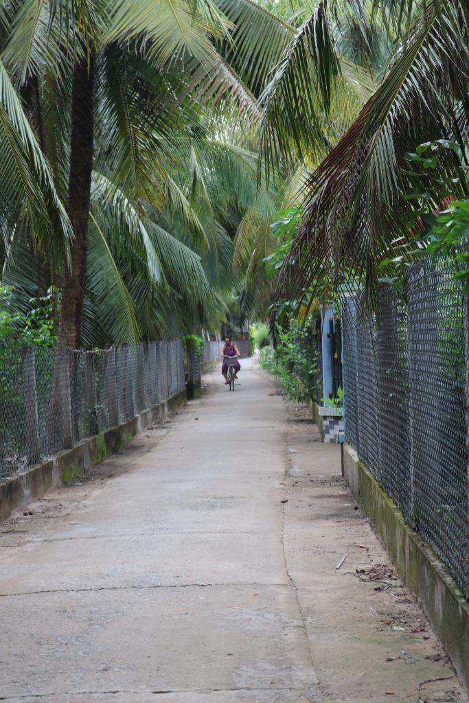 Đường quê xanh mát với hàng dừa rợp bóng ở Bình Đại , du lịch C2T