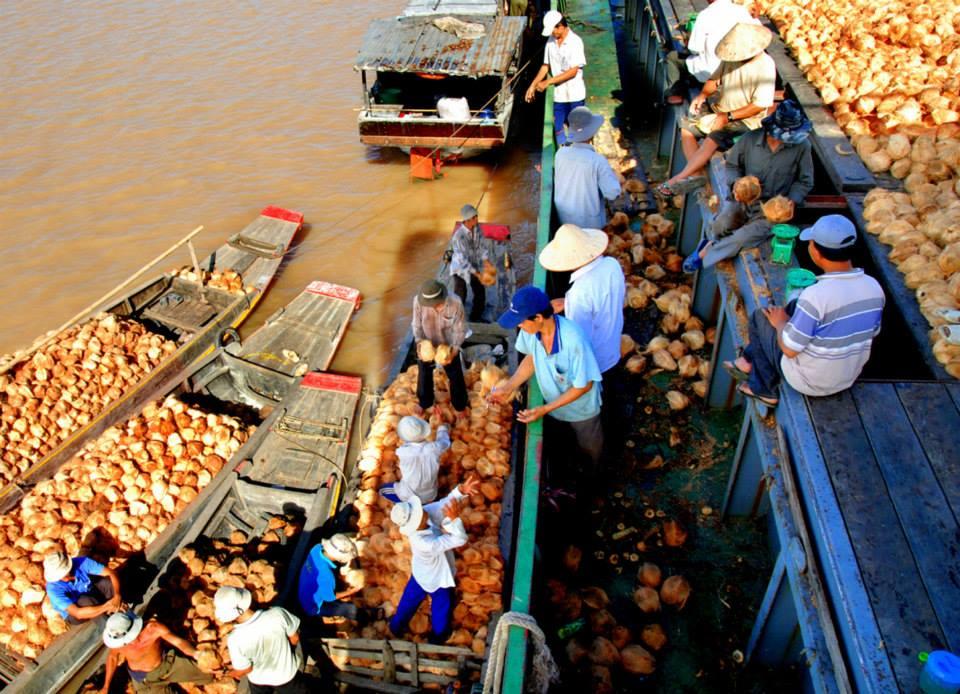 Chợ dừa nổi song Thom nhộn nhịp mua bán dừa